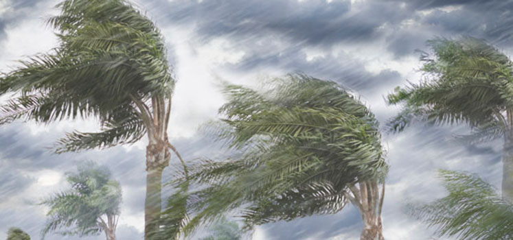Hurricanes, the Muni Market, and the Duct Tape Effect